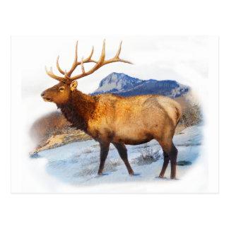 bull elk t idea.pdf postcard