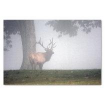 Bull Elk Tissue Paper