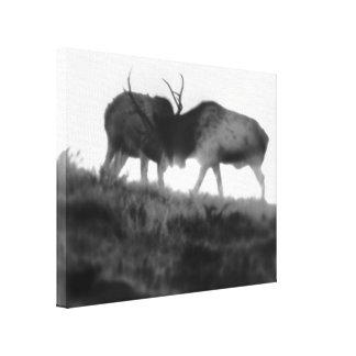 Bull Elk Western Wildlife Art Canvas Print