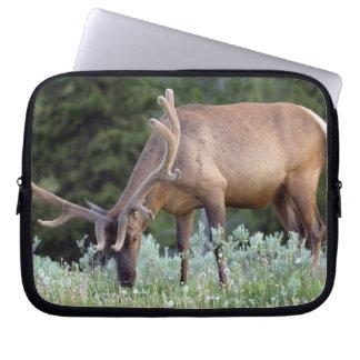 Bull Elk with antlers in velvet grazing in Laptop Sleeve