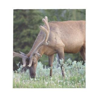Bull Elk with antlers in velvet grazing in Note Pad