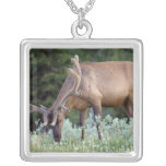 Bull Elk with antlers in velvet grazing in Silver Plated Necklace