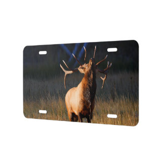 Bull Elk with Head Back License Plate