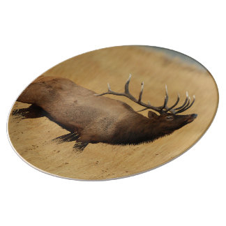 Bull Elk with Head Back Plate