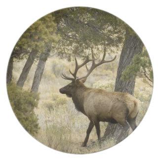 Bull Elk, Yellowstone National Park, Wyoming, Plate