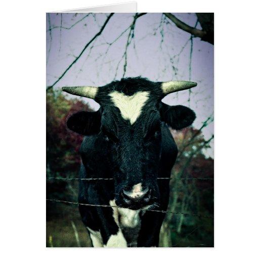 Bull en una cerca tarjeton