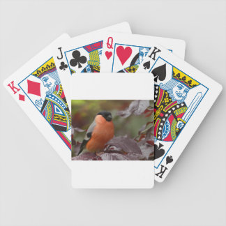 Bull Finch Bicycle Playing Cards