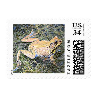 Bull Frog (Missouri, Ohio and Oklahoma) Postage