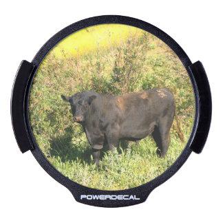 Bull LED Window Decal