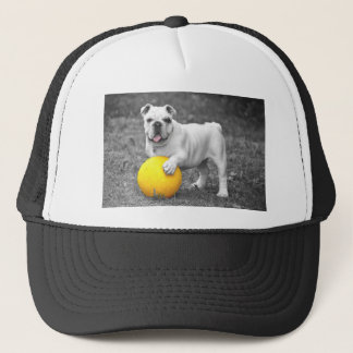 Bull in black and white with yellow ball trucker hat