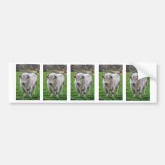 Bull in field bumper sticker