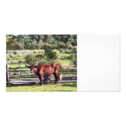 Bull in Pasture Custom Photo Card