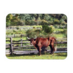 Bull in Pasture Flexible Magnets