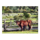 Bull in Pasture Postcards