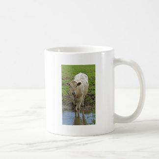Bull joven en el agujero de agua taza