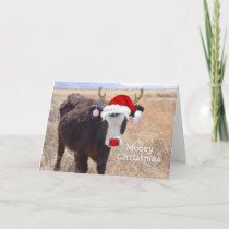 Bull Mooey Christmas Holiday Card