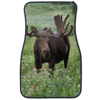 Bull moose Alces alces) in wildflowers, Car Mat