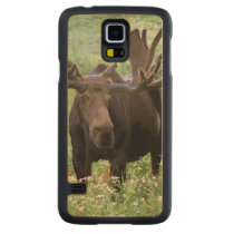 Bull moose Alces alces) in wildflowers, Carved Maple Galaxy S5 Case