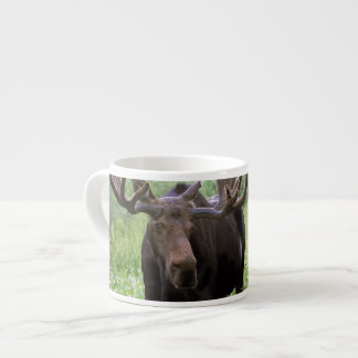 Bull moose Alces alces) in wildflowers, Espresso Cup