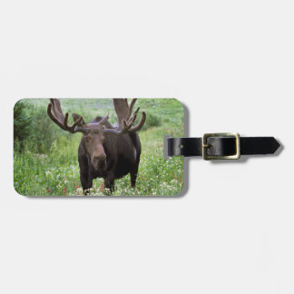Bull moose Alces alces) in wildflowers, Luggage Tag