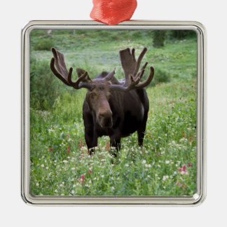 Bull moose Alces alces) in wildflowers, Metal Ornament