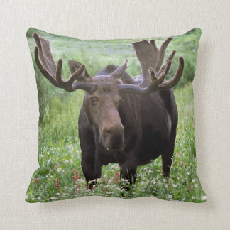 Bull moose Alces alces in wildflowers Pillows