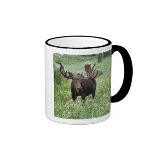 Bull moose Alces alces) in wildflowers, Ringer Mug