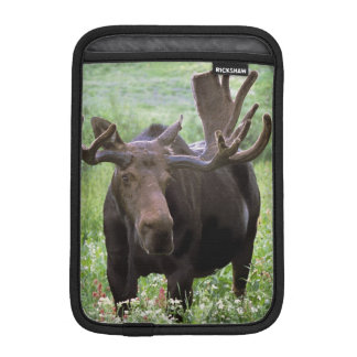 Bull moose Alces alces) in wildflowers, Sleeve For iPad Mini