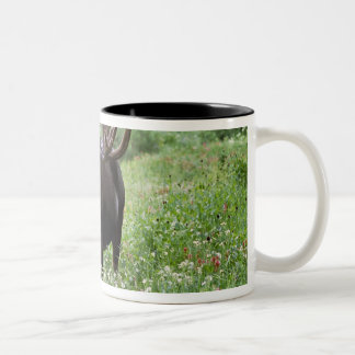 Bull moose Alces alces) in wildflowers, Two-Tone Coffee Mug
