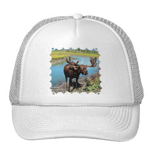 Bull Moose Baseball Hat