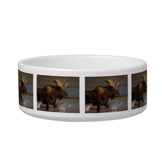 Bull Moose Bowl