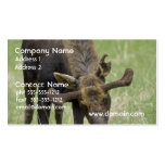 Bull Moose Busienss Card Double-Sided Standard Business Cards (Pack Of 100)