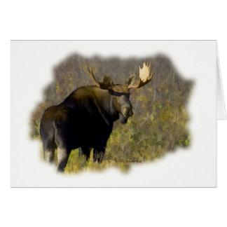 Bull Moose Card