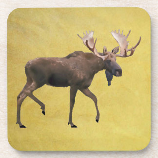 Bull Moose Coaster