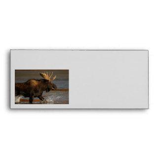 Bull Moose Envelope