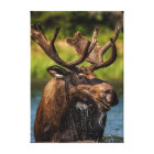 Bull moose feeding in Glacier National Park Canvas Print