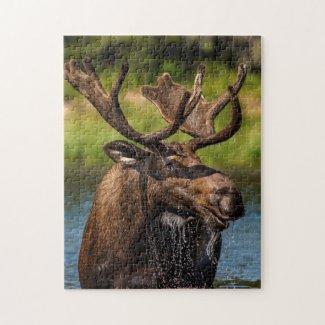 Bull moose feeding in Glacier National Park Jigsaw Puzzle