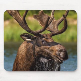 Bull moose feeding in Glacier National Park Mouse Pad