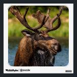 "Bull moose feeding in Glacier National Park Wall Sticker<br><div class=""desc"">Bull moose feeding in Glacier National Park,  Montana,  USA | Chuck Haney / DanitaDelimont.com</div>"