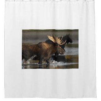 Bull Moose & Female Shower Curtain
