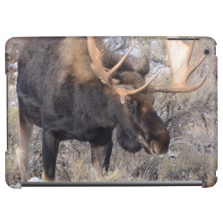 Bull Moose in field with Cottonwood Trees iPad Air Cases