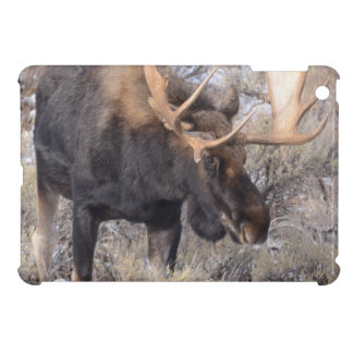 Bull Moose in field with Cottonwood Trees iPad Mini Case