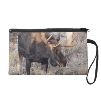 Bull Moose in field with Cottonwood Trees Wristlet
