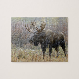 Bull moose in snowstorm with aspen trees in puzzle