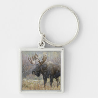 Bull moose in snowstorm with aspen trees in Silver-Colored square keychain