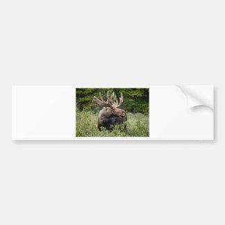 Bull Moose In the Wild Bumper Sticker