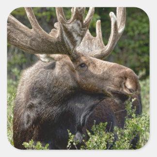 Bull Moose In the Wild Sticker