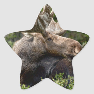 Bull Moose In the Wild Star Stickers