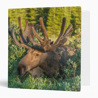 Bull moose in velvet, Colorado 3 Ring Binder