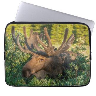 Bull moose in velvet, Colorado Computer Sleeve